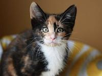 Beth - MEET ME @ PETCO 8/18's story This kitten is