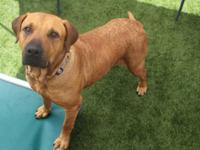 Bethany, a Black Mouth Cur for Adoption   Are you
