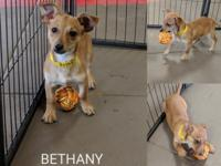 Meet Bethany. She is spayed and Current on all