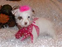 Betsy is a cute pie. She is 1/2 Maltese 1/2 Parti