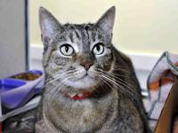 BETSY's story Check out this photogenic feline! Meet