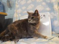 Betty is a sweet senior, she was out of time at another