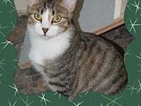 Betty's story This pretty kitty is Betty. She is