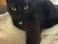 Betty's story Betty is looking to cuddle with someone