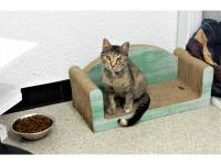 Betty is a curious little kitten who is a little shy at