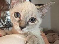 Betty White's story Betty White is a shy siamese girl