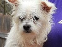 Betty White's story The tiny Maltese, Ye Ancient Dogge