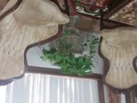 Set of two antique chairs. The chairs need upholstery