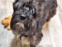 Beya's story Beya is a 6 year old female Scottish