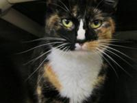 Bianca is a one year old, beautiful Calico with a sweet