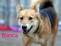 Bianca's story I am such a pretty girl with a