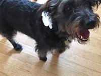 Bianca's story Bianca is a little terrier mix who loves