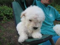 Bichon frise.......TINY>>>TINY>>>>TINY If you want a