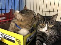 Big M (w/ Little M, FIV+ Positively Adoptable!)'s