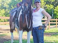 Tri-colored, well broke, tall Pintabian gelding. 15.1