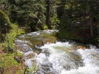 INCREDIBLY BEAUTIFUL 216 ACRE FORESTED PROPERTY IN BIG