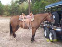 Big, Stout and Nice looking 11 year old Bay Gelding. I