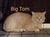 Big Tom's story This big guy is done with the outdoor