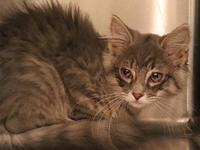 Billie's story Billie is a sweet little kitty that