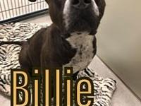 My story Billie is a 4-5 yr old pit bull. What a