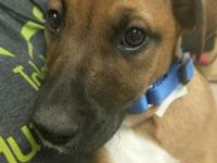 Billy's story Hi my name is Billy! I was transferred to