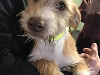 Billy's story Hi, I'm Billy! I'm a Terrier blend pup