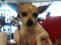 At Wags and Whisker's Pet Rescue: Bina is a small 4