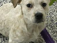 Bindi's story This little girl is so sweet and looking
