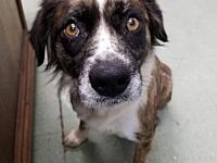BINDI's story NEW ARRIVAL around 40 pounds Her adoption