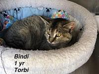 Bindi's story Our pets are spayed/neutered and current