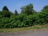 2 LOTS 50x140, EACH SIDE BY SIDE LOCATED in a