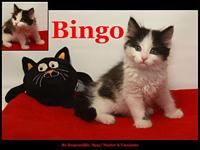 Bingo's story Bingo went from a severe flea infestation