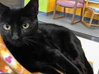 Binks's story Binks is a sleek black cat. He has long