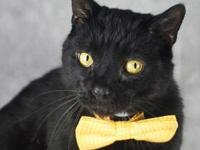 Binx's story I came to the Kentucky Humane Society