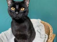 Binx's story Binx? What a minx! A fun, playful guy who
