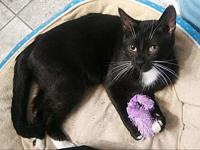 Binx's story Hi! My name is Binx. I am a 1-year-old,