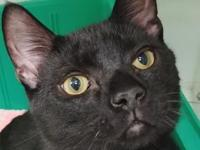My story Binx is a sweet boy who LOVES to play all of