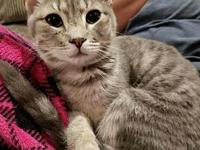My story Birch is a beautiful silver/gray tabby who