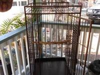 Large cal cage for parrot. Very good condition. No rust