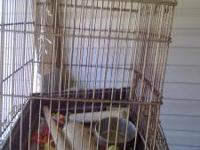 hello. I have 2 bird cages for sale. Yes, they are used