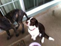 Two year old female mix, she is energetic and easily