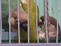 AJ-AVIARY Hi, we have a parrotlet special sale going