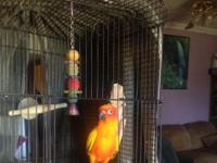 Sun Conure 3 years old payed $400.00 will take $