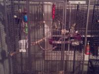 I have a bird cage for sale 32x43, if interested call