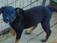Birdie is a female and a cattle dog mix perhaps? We