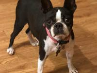 Welcome Birdie  Birdie is a 6-7 year old female. She