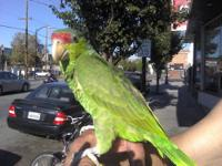 Specializing in lovable healthy birds like parakeets,