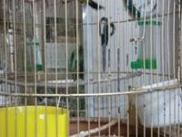 I have couple birds and use cages for sale for more