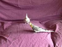 Beautiful loving birds, male and female. Would like to