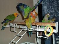 I have many birds that need to be rehomed. Due to a
